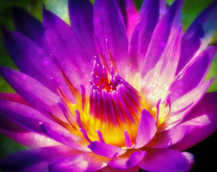 Purple Sparkle Lotus Flower Photograph By Alma Yamazaki