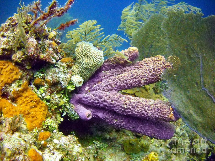 Coral Reef Digital Art - Purple Sponge by Dave DiFiore