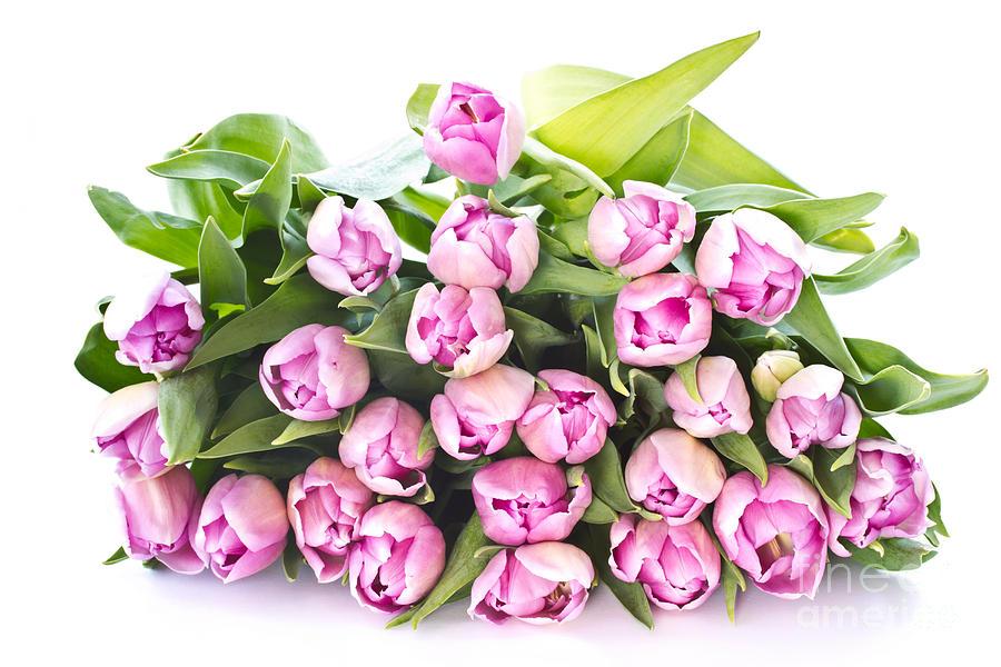 Purple Tulips Photograph - Purple Tulips by Boon Mee