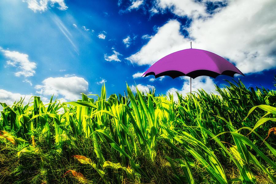 Umbrella Photograph - Purple Umbrella in a field of corn by Bob Orsillo