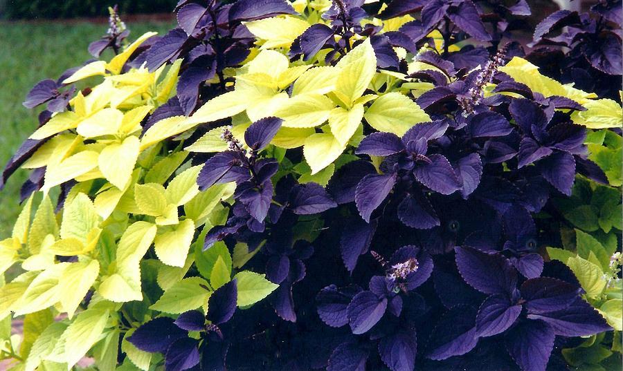 Purple Photograph - Purple by Valerie Howell
