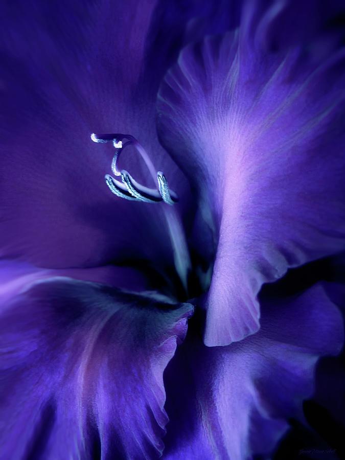 Gladiola Photograph - Purple Velvet Gladiolus Flower by Jennie Marie Schell