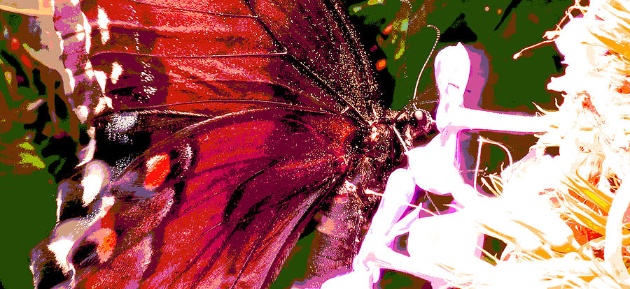 Purple Wings Photograph - Purple Wings Two by Walter Klockers