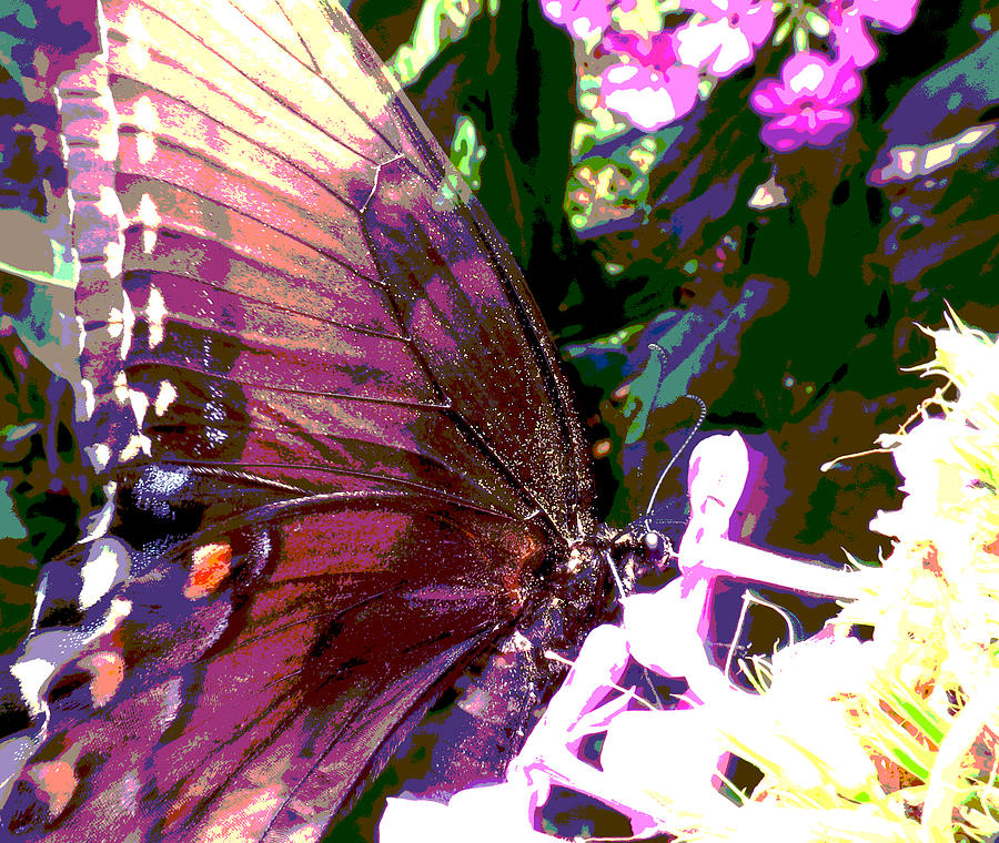 Butterfly Photograph - Purple Wings by Walter Klockers