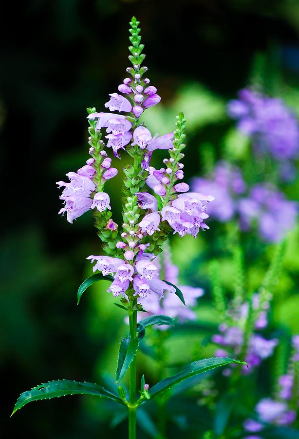 Purples Photograph