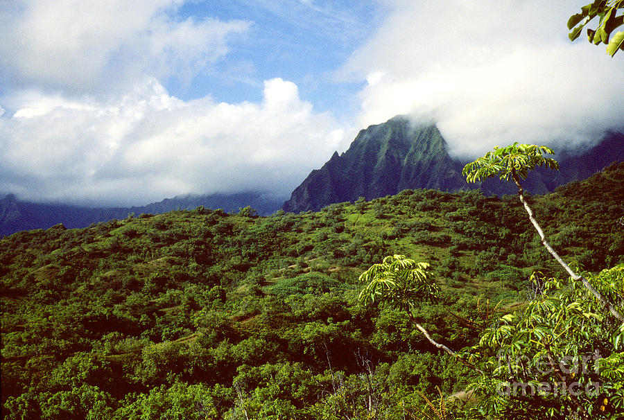 Hawaii Photograph - Puu Piei Trail Koolau Mountains by Thomas R Fletcher