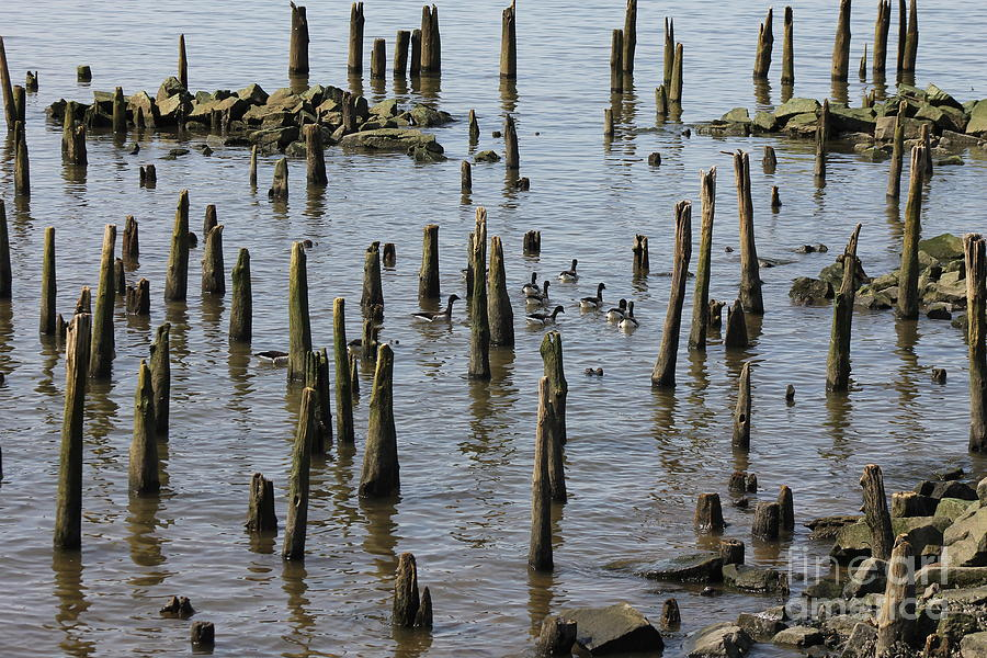 Ducks Photograph - Pylon Maze by Bobby Cole