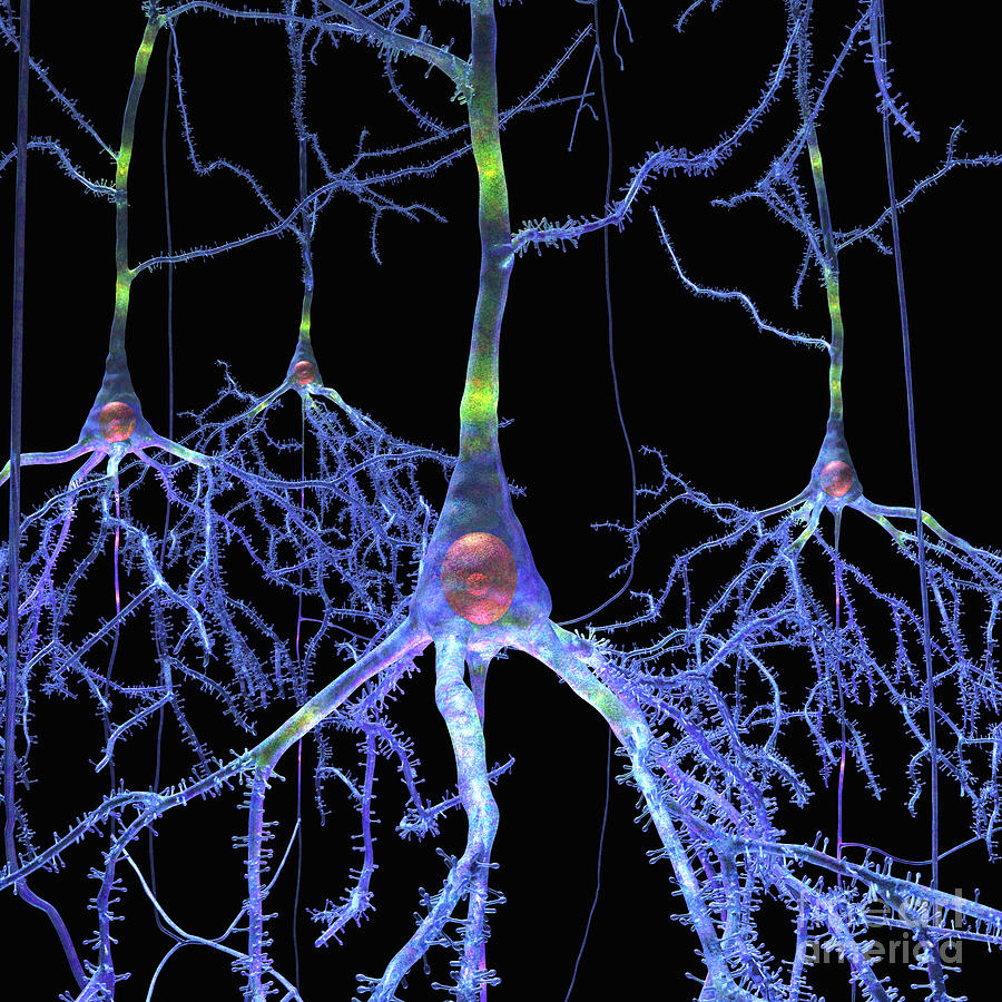 Pyramidal Cells from Brain by Russell Kightley