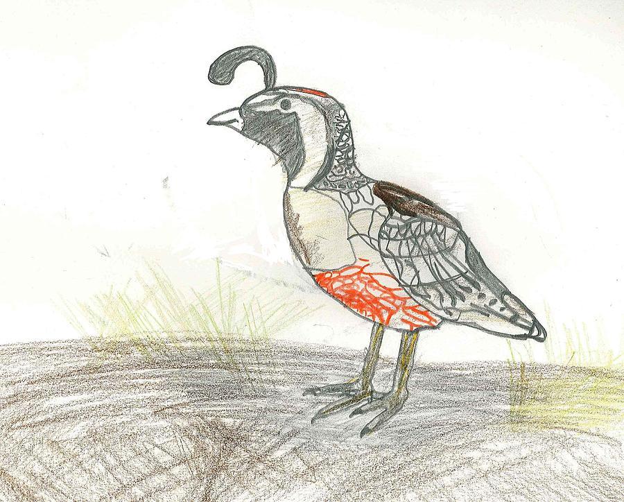 Quail Drawing - Quail Bird by Ethan Chaupiz