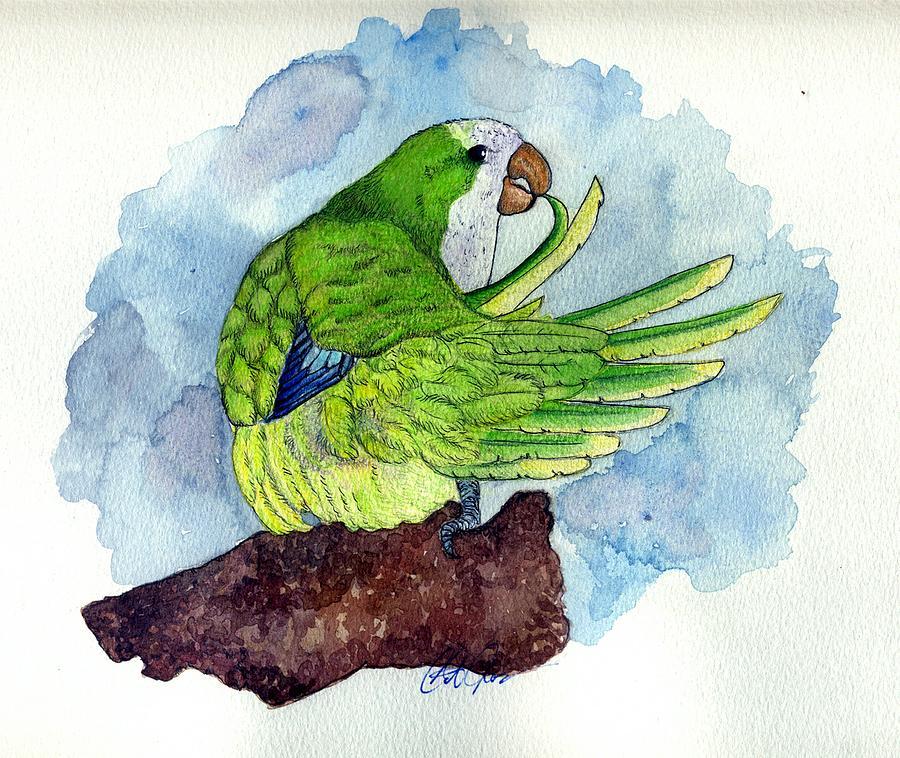 Quaker Parakeet Bird Portrait   Painting by Olde Time  Mercantile