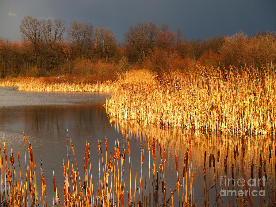 Marsh Photograph - Quakertown Marsh Before Spring Storm by Anna Lisa Yoder