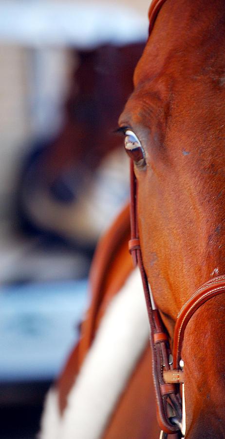 Quarter Horse Eye Photograph