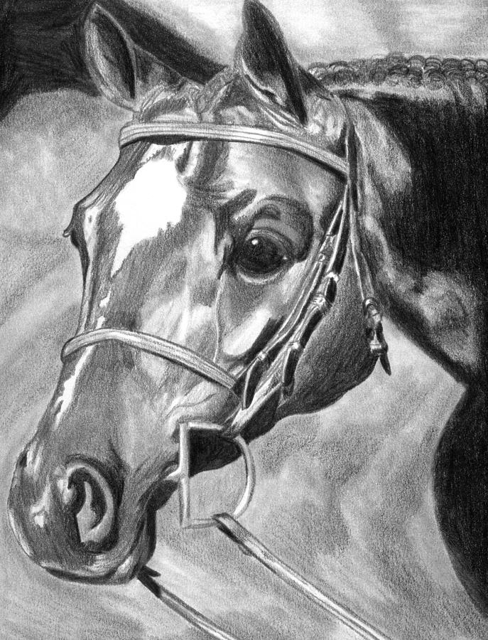 Quarter Horse Hunter Drawing by Olde Time  Mercantile
