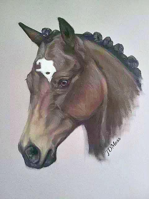 Horse Drawing - Quarter Horse by Janet Moss