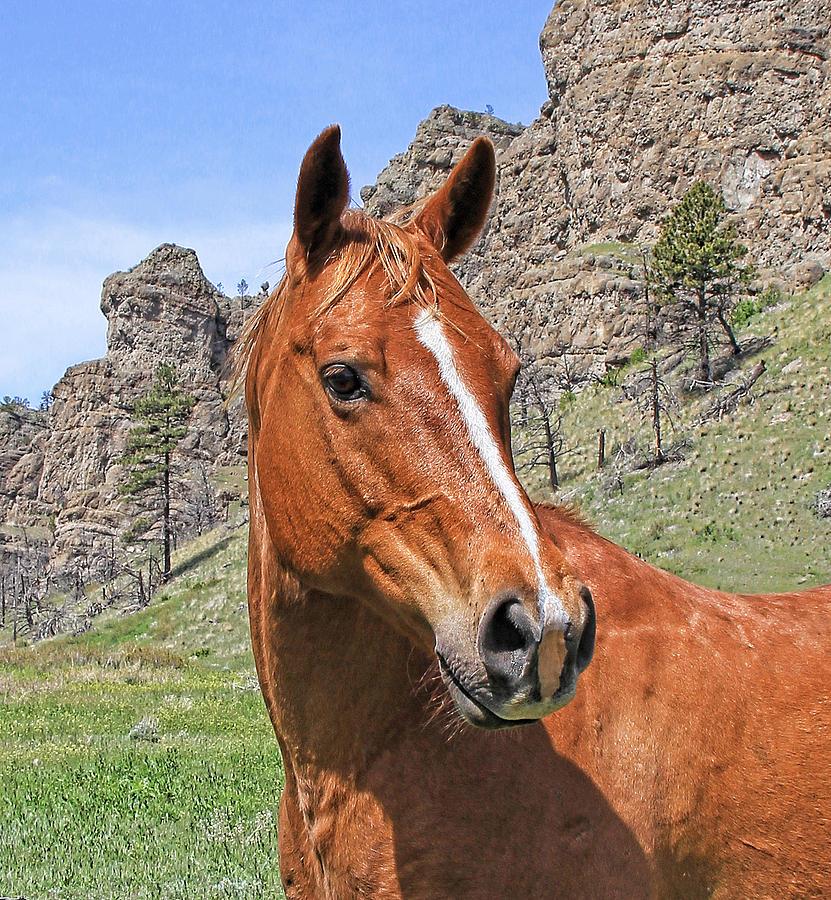 Horse Photograph - Quarter Horse Portrait Montana by Jennie Marie Schell
