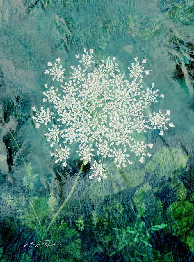 Flower Digital Art - Queen Annes Lace  by Ann Powell