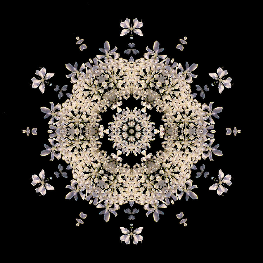Flower Photograph - Queen Annes Lace Flower Mandala by David J Bookbinder