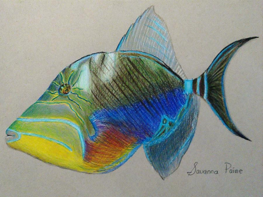 Queen Drawing - Queen Triggerfish by Savanna Paine