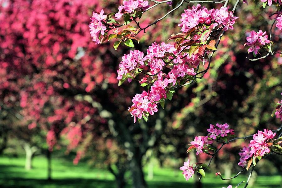Queens Botanical Garden Photograph - Queens Botanical Garden by JC Findley