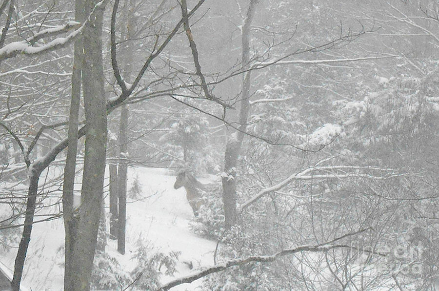 Snow Photograph - Querida In The Snow Storm by Patricia Keller