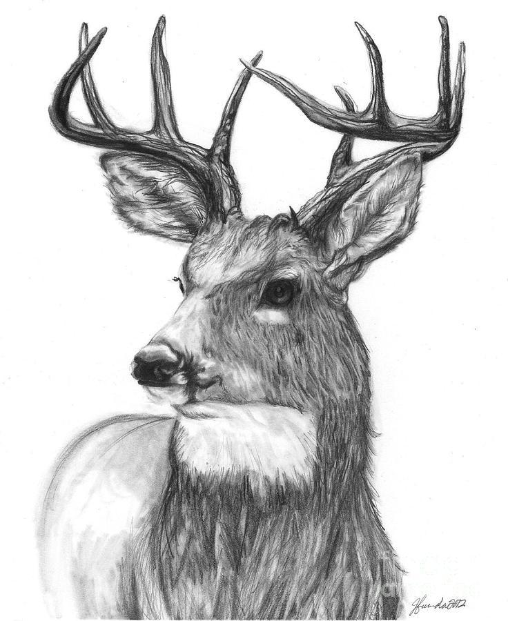 Deer Drawing - Quick Steps In The Woods by J Ferwerda