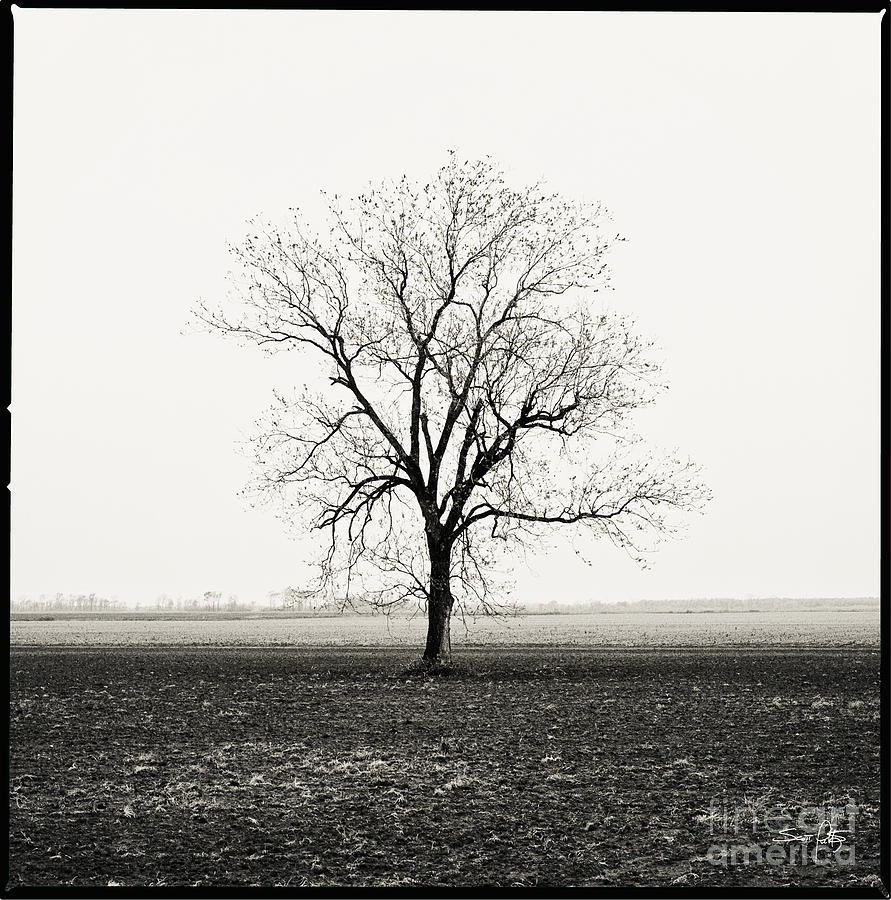 Tree Photograph - Quiet Desperation by Scott Pellegrin