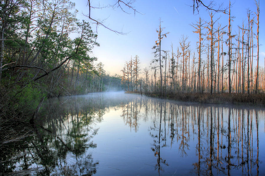Cypress Photograph - Quiet. by JC Findley