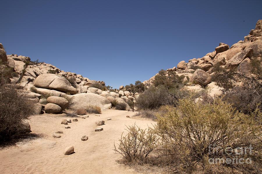Rock Climbing Photograph - Quiet Time by Amanda Barcon