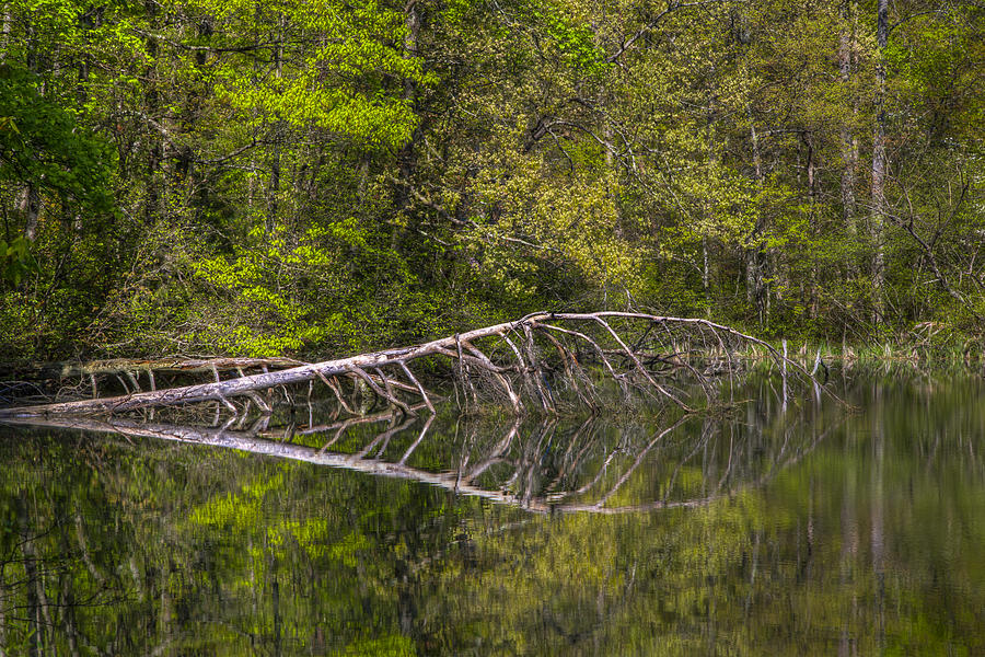 Appalachia Photograph - Quiet Waters by Debra and Dave Vanderlaan
