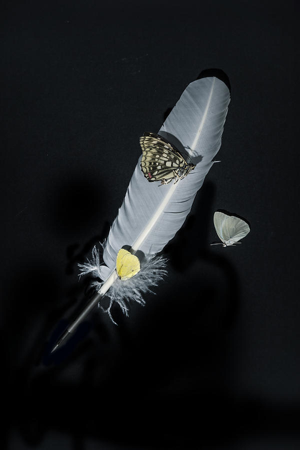 Quill Photograph - Quill With Butterflies by Joana Kruse