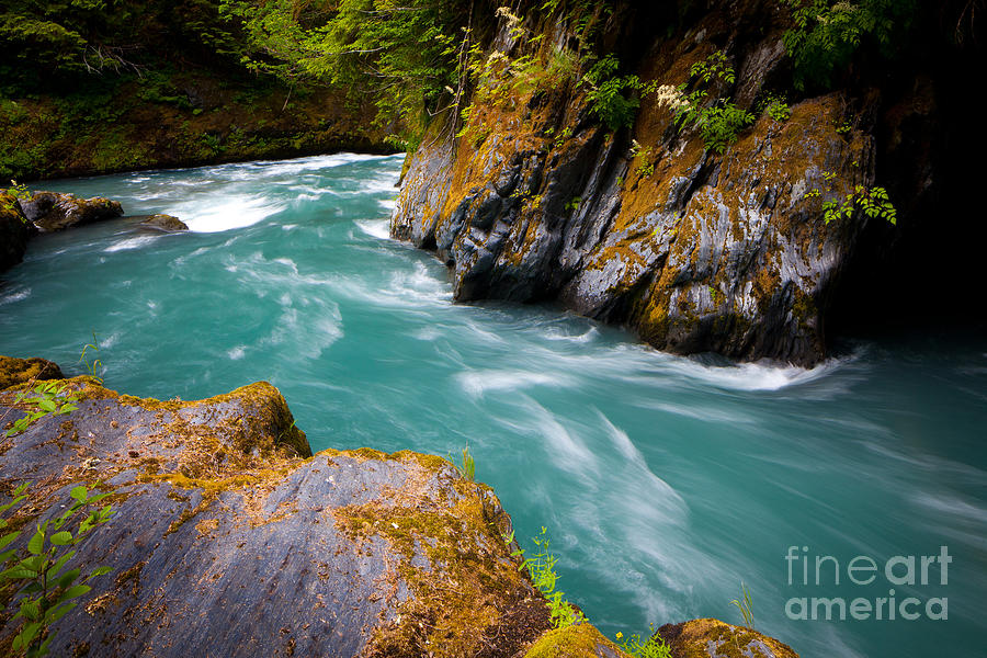 America Photograph - Quinault River Bend by Inge Johnsson