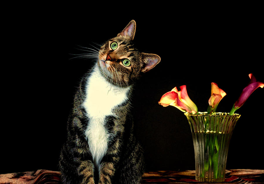 Cat Photograph - Quizzical Cat by Linda Mcfarland