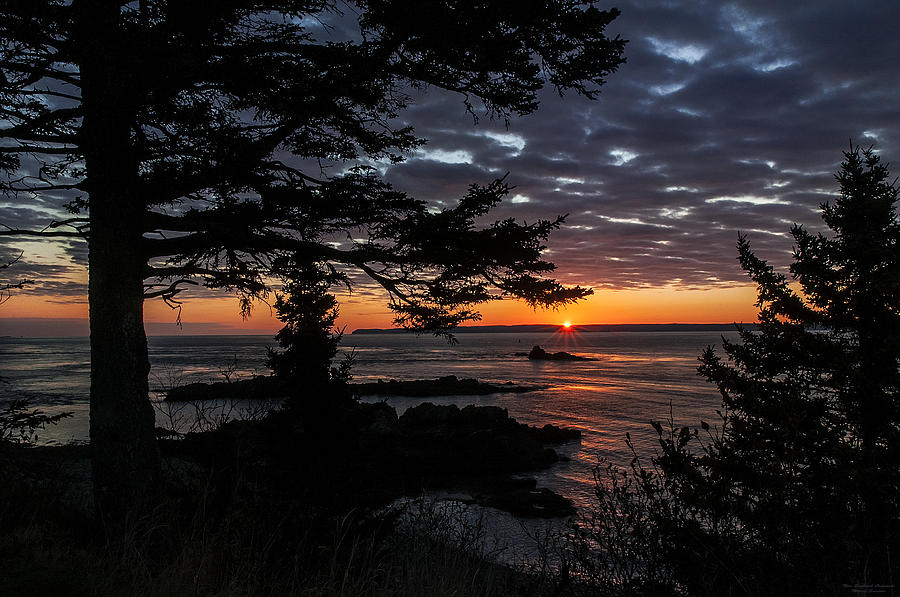 Quoddy Head State Park Photograph - Quoddy Sunrise by Marty Saccone