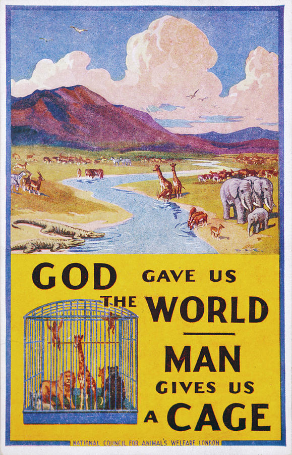 God Gave Us The World Man Gives Drawing By Mary Evans Picture Library