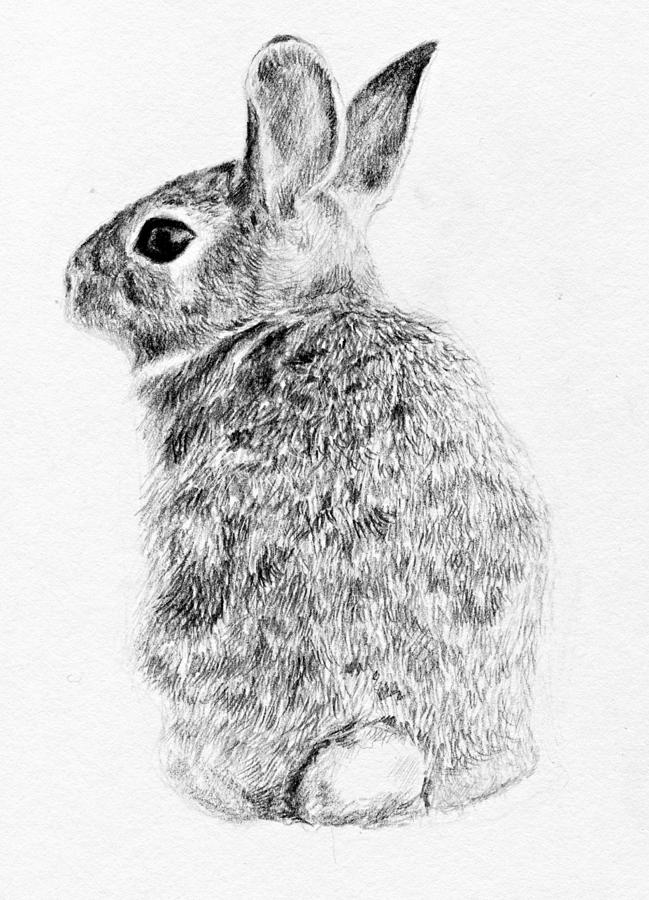 rabbit drawing by anna shell