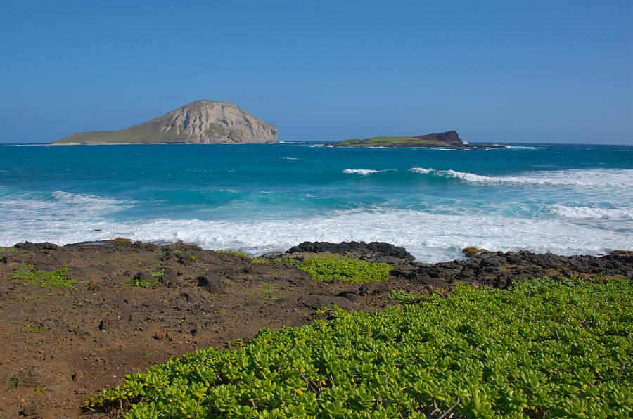 Waves Photograph - Rabbit Island by Brian Harig