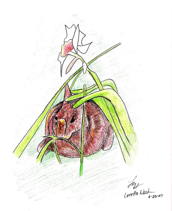 Rabbit Drawing - Rabbit by Loretta Nash