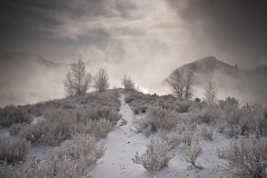 Rabbit Tracks Photograph - Rabbit Tracks by Michael Van Beber