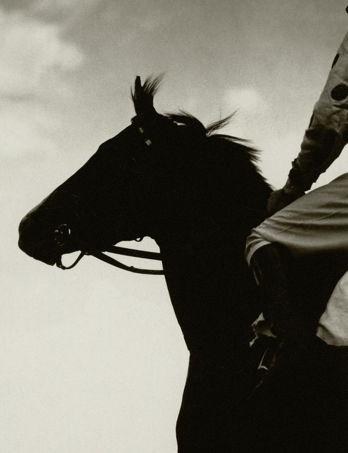 Race Horse Gallant Fox Photograph by Edward Steichen