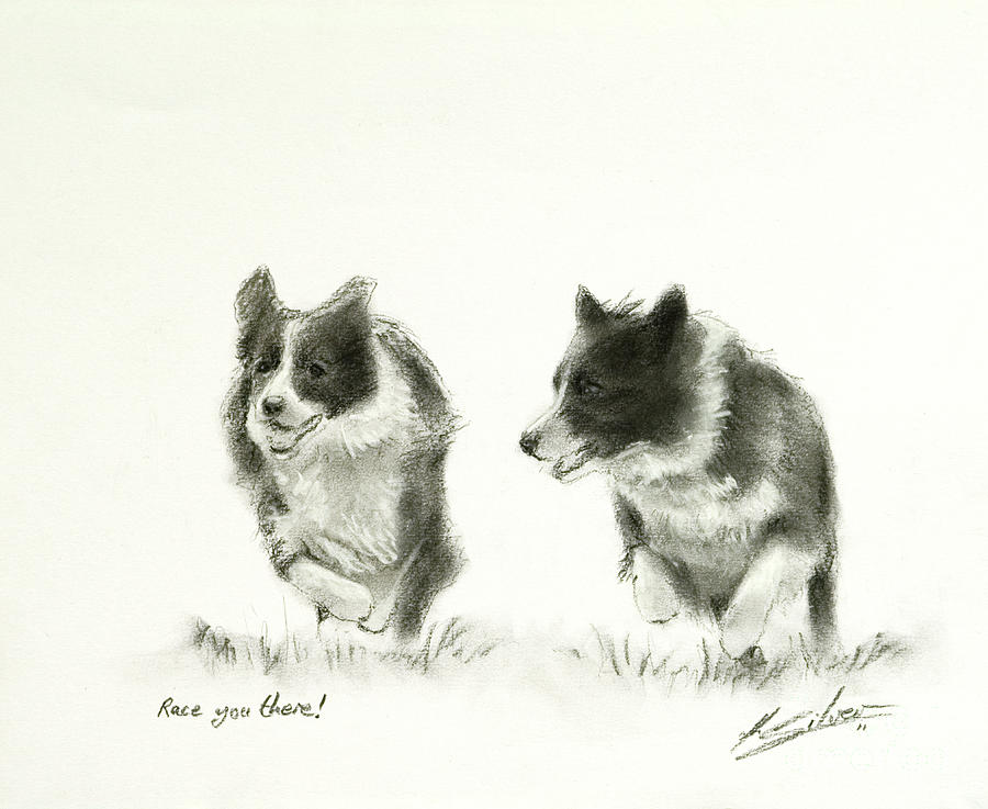 Border Collie Paintings Pastel - Race You There by John Silver