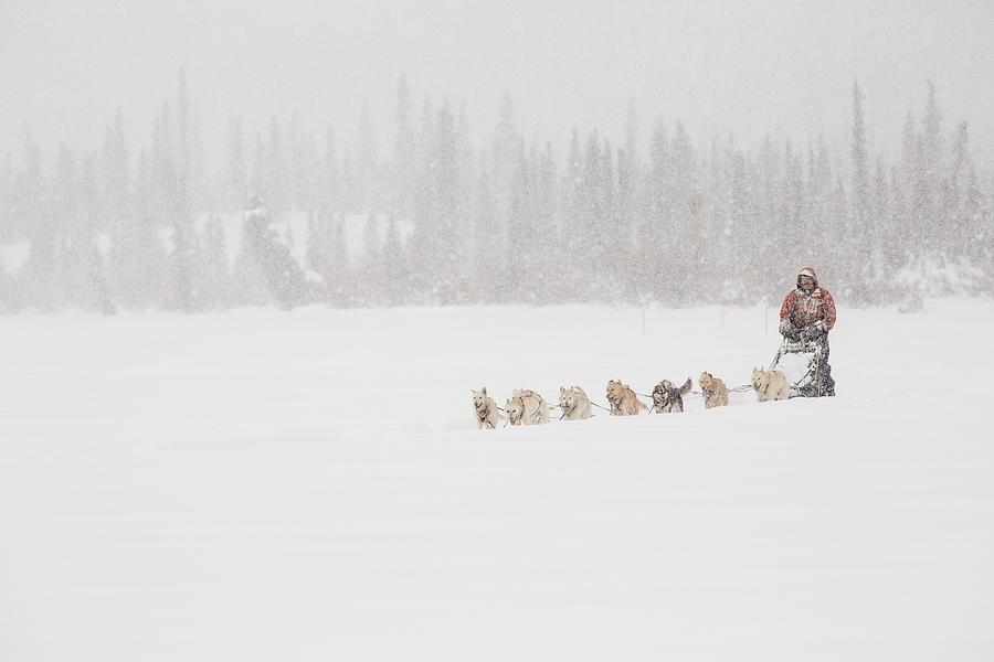 Alaska Photograph - Racing Through The Falling Snow by Tim Grams