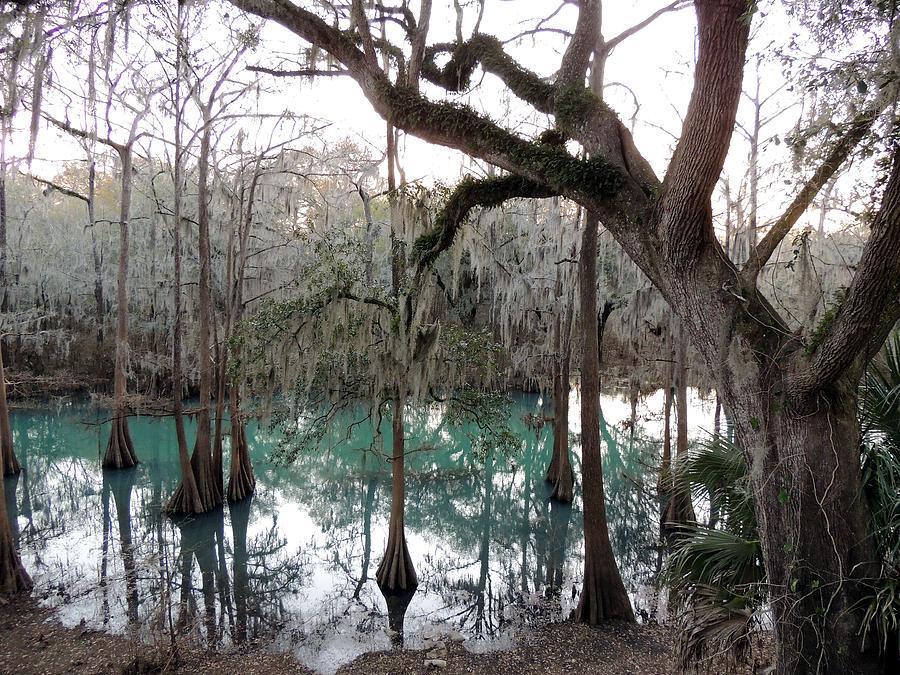 Digital Photography Photograph - Radium Springs Creek by Kim Pate
