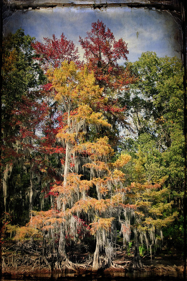 Autumn Photograph - Raggedy Bayou by Lana Trussell