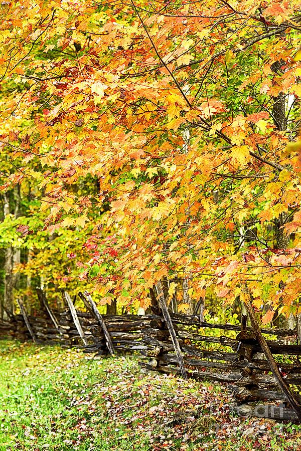 Fall Photograph - Rail Fence Fall Color by Thomas R Fletcher