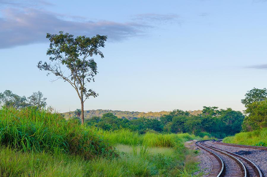 Nature Photograph - Rails by Joab Souza
