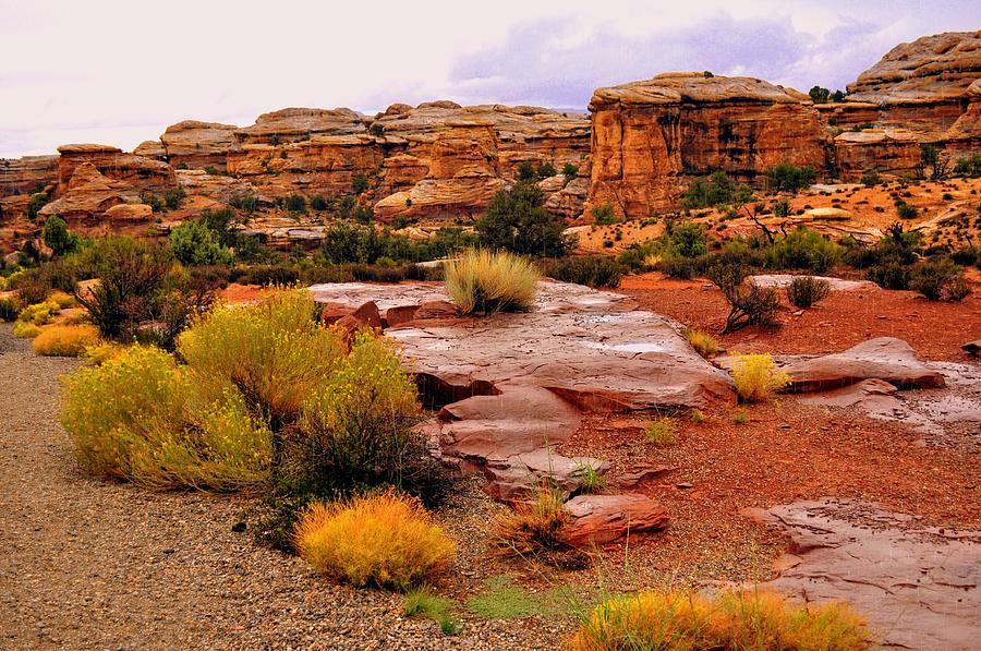 Canyonlands National Park Photograph - Rain At The Needles District 2 by Marty Koch