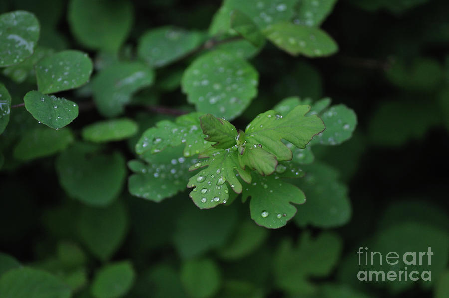 Plant Photograph - Rain Drops by Heather L Wright