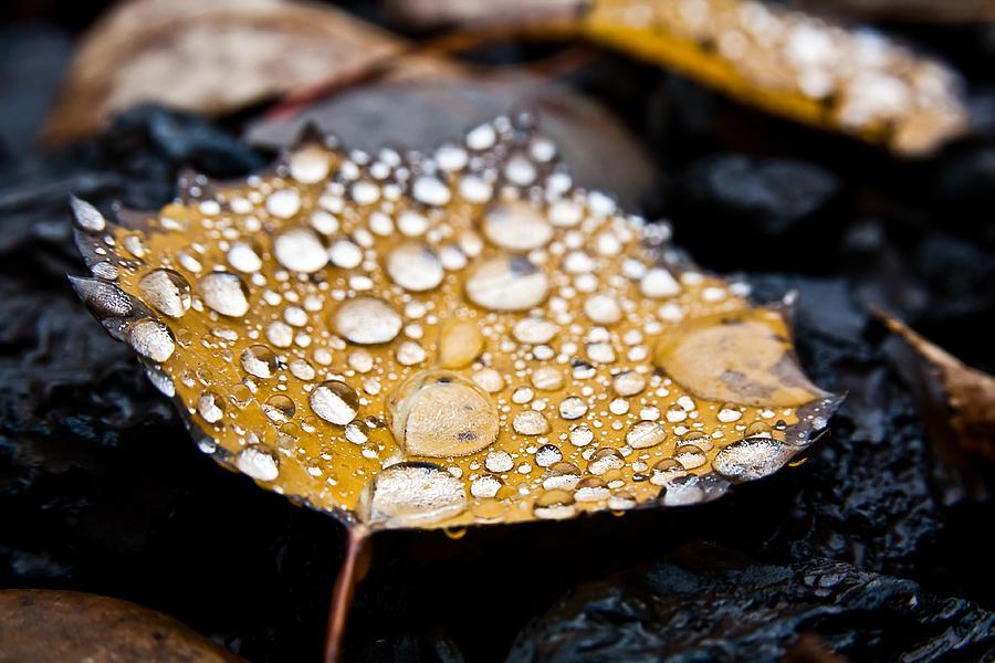 Rain Drops Photograph - Rain Drops On Autumn Birch Leaf by Brian Boudreau