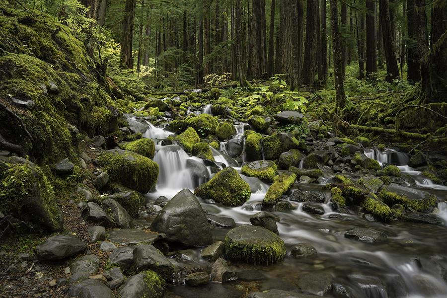 Rain Forest Falls Photograph