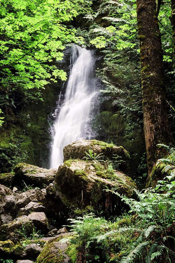 Quinault Photograph - Rain Forest Falls by Kelley King